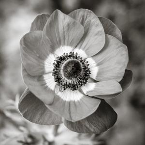 Fleur-printemps-jardin-vignette-carré-4 Photo Gallery