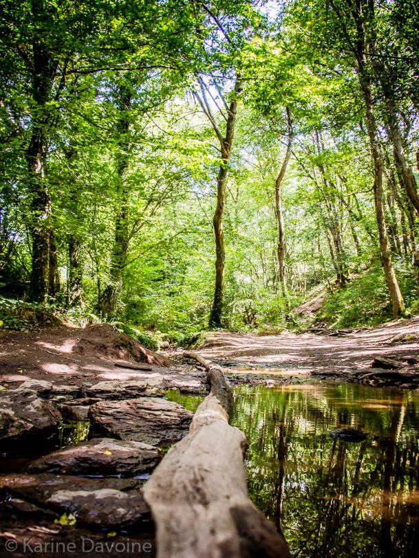 Forêt-nature-paysage Let's work Photographie