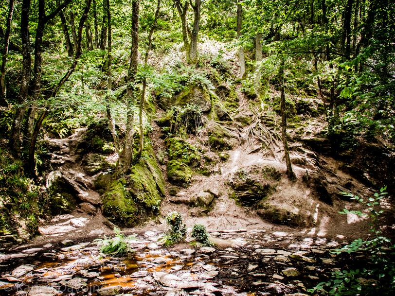 nature-forêt-paysage Let's work Photographie
