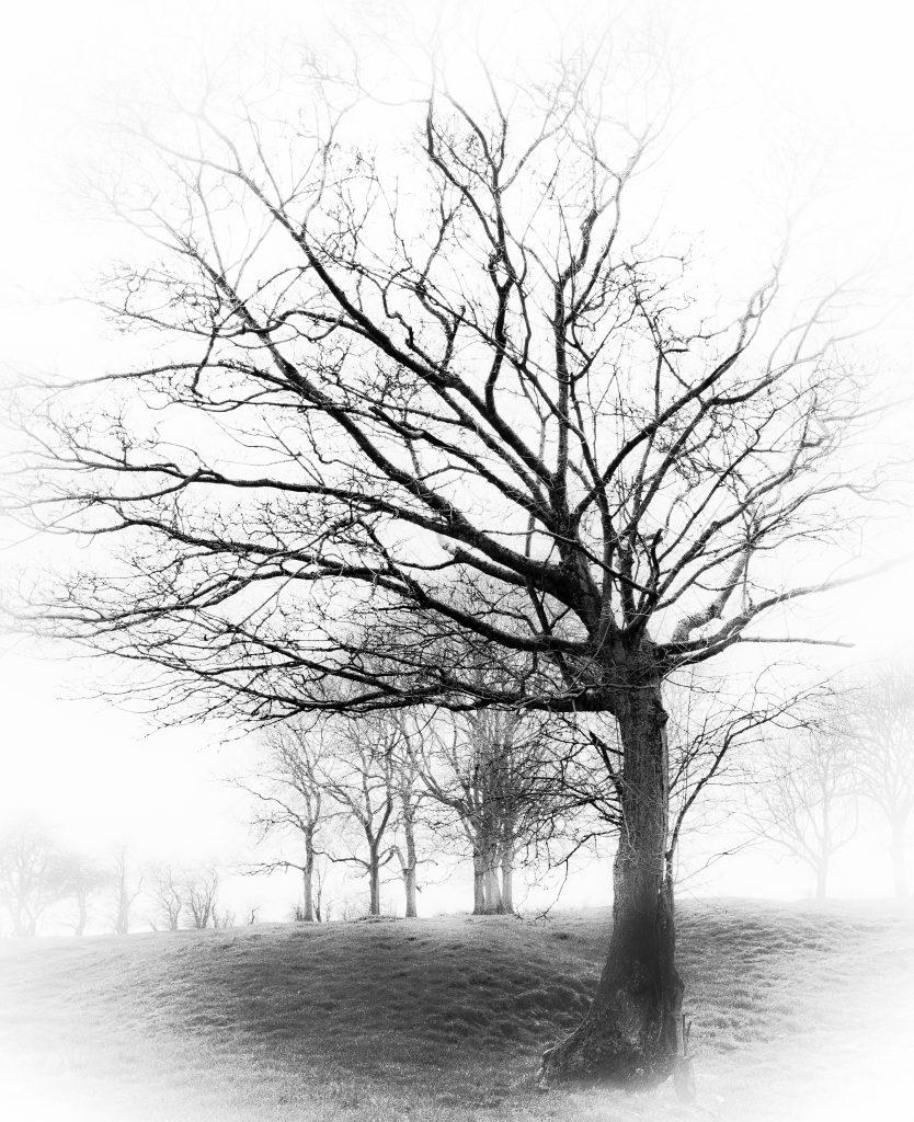 CNFR-IG9-3923-834x1024 Autour du mariage 2: L'arbre à empreintes Peinture Photographie